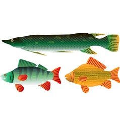 Pike carp and perch vector