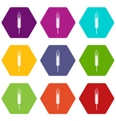 Stalk of ripe barley icon set color hexahedron vector