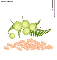 Indian gooseberry with vitamin c and minerals vector