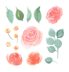 Floral and leaves watercolor elements set hand vector