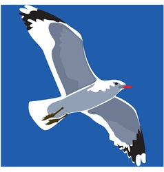 gull vector image vector image