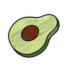 half avocado vegetable healthy food vector image