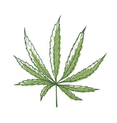 hemp leaf icon green organic cannabis plant vector image
