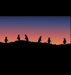 Lined penguin scenery at night vector