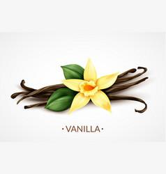 Vanilla flower realistic image vector