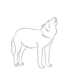 wolf howls image lines vector image