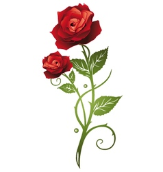 Rose floral vector