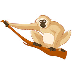 cartoon smiling gibbon vector image vector image