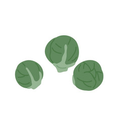 Fresh raw whole brussels sprouts composition vector