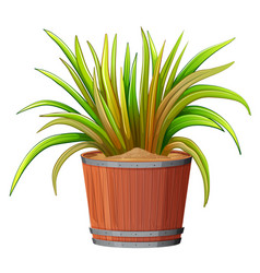 plant in wooden pot vector image