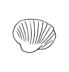 Set of various beautiful mollusk sea shells vector