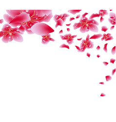 sakura flowers background cherry blossom isolated vector image