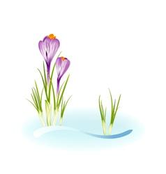 Spring crocuses vector image vector image