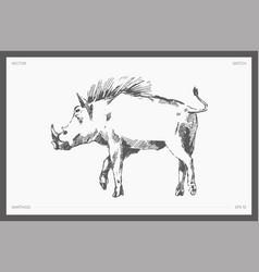 Drawn warthog realistic drawing sketch vector
