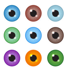 realistic eyeball set vector image