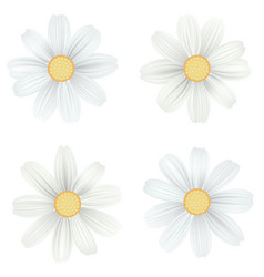 Set of isolated white camomile daisy vector