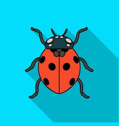 ladybug icon in flat style isolated on white vector image