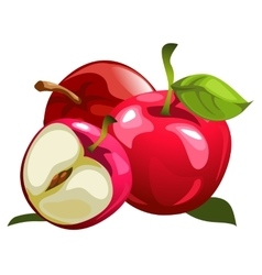Ripe red apples and half one vector image vector image