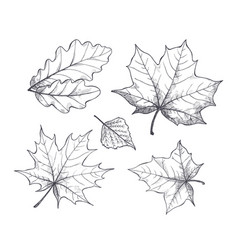 Fall autumn season leaves sketch outline vector