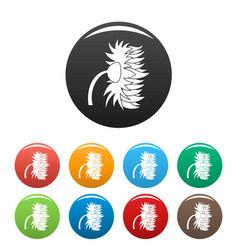Garden sunflower icons set color vector