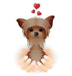 Yorkshire Terrier in love vector image