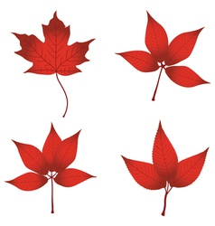 red leaves vector image vector image
