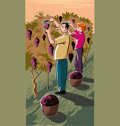 man and girl in a vineyard vector image