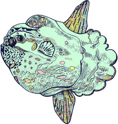 moonfish or molamola fish - ink drawing hand vector image