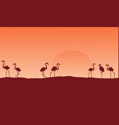 Scenery flamingo at hill silhouettes vector