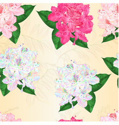 seamless texture flowers rhododendrons vector image