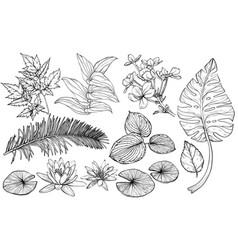 set branches flowers and leaves hand drawn vector image