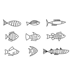 set sketch line drawing fish icons vector image