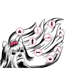 beauty dog salon concept vector image