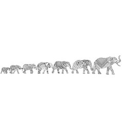 7 elephants on a white background vector