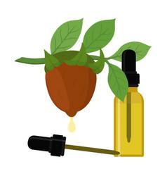 jojoba branch organic oil bottle liquid vector image
