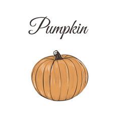 pumpkin is orange vector image