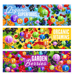 Vitamin superfoods and natural organic berries vector