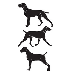 Weimaraner dog vector image
