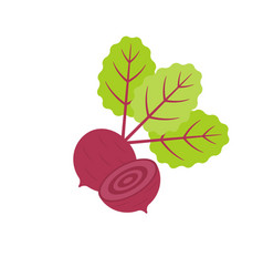 isolated red beetroot whole vector image vector image