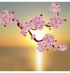 Lush Japanese cherry A branch of pink cherry vector image vector image
