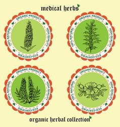 medicinal herbs 1 vector image