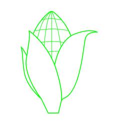 Corn vector