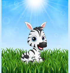 Cute baby zebra cartoon in the grass on a backgrou vector