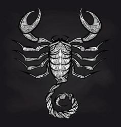 doodle scorpion on blackboard vector image vector image