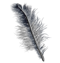feather black vector image