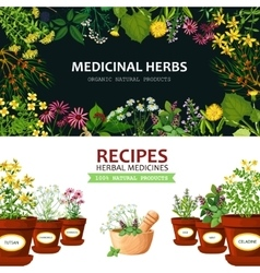Medicinal Herbs Banners vector image