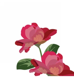 Roses isolated on white vector