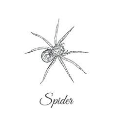 spider sketch spider vector image