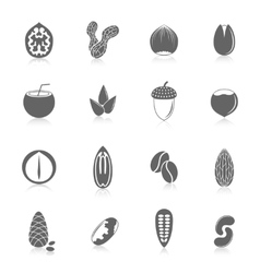 Set of nuts icons vector image