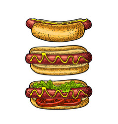 Hotdog with tomato mustard leave lettuce vector